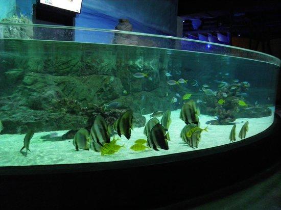 Istanbul Sea Life Aquarium: Open tanks