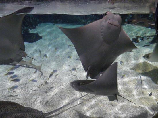 Istanbul Sea Life Aquarium: Rays