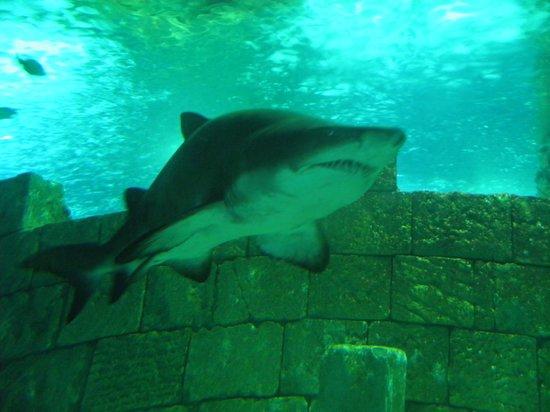 Istanbul Sea Life Aquarium: SHARK!!