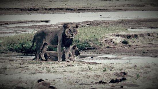 Jacaranda Beach Resort: safari