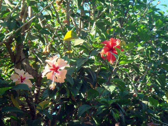Casa Lora Apartments: Gartenbepflanzung am Pool