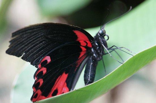 Siquijor Butterfly Sanctuary : papillon