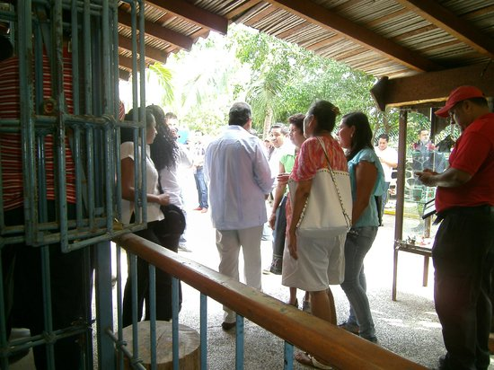 La Sirena Gorda : Governor and his entourage leaving