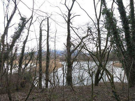 Naturschutzgebiet Wichenstein: knorrige Bäume