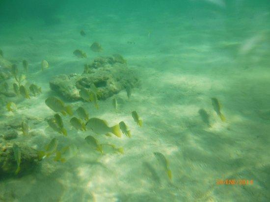 Cocoplum Beach Hotel: snorkel en rocky cay