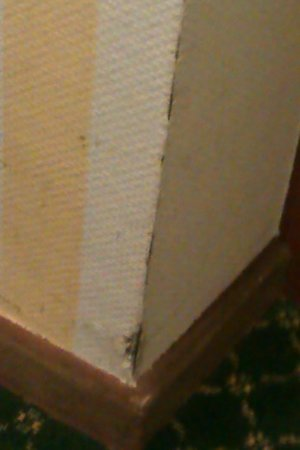 Hotel Astoria: Scuffmarks on a wall in the staircase