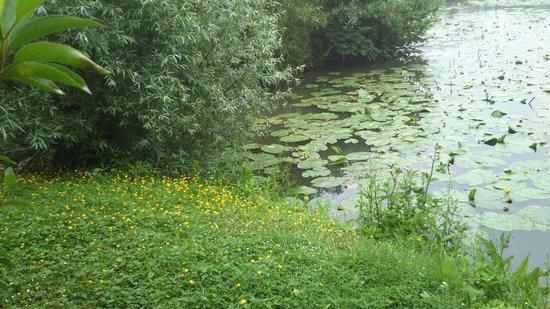 Marais de l'Audomarois : Le marais Audomarois ( le bachelin)