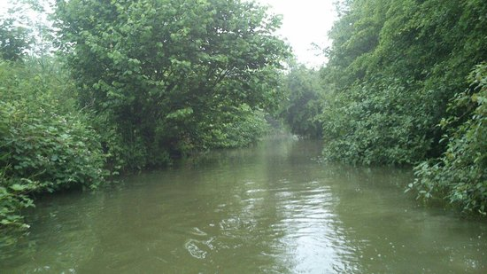 Marais de l'Audomarois : Le bachelin