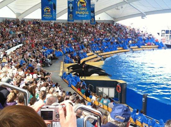 Sea lion show picture of loro parque puerto de la cruz tripadvisor - Loro parque puerto de la cruz ...