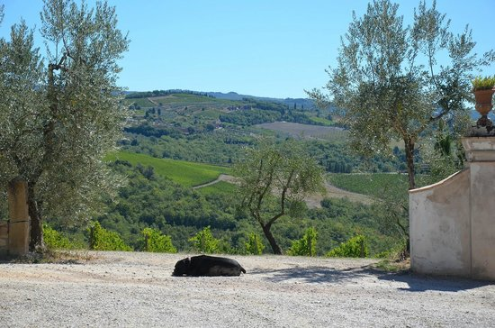 Fattoria e Villa di Rignana: Hotelgelände/Ausblick Fattoria di Rignana
