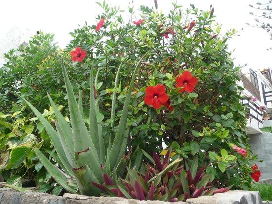 Gloria Palace San Agustín Thalasso & Hotel : Vegetation