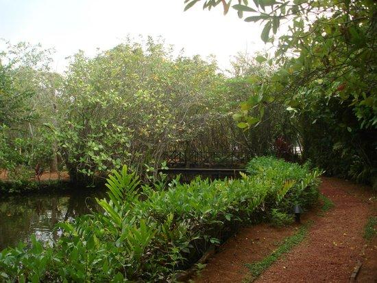 Dalmanuta Gardens - Ayurvedic Resort & Restaurant : garden area