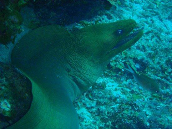 Blue Bay Lodges - Sunny Curacao: onderwaterwereld bij eigen strand