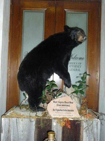 State Capitol: West Virginia Black Bear