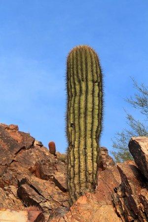 Phoenix Mountain Preserve: Cactus