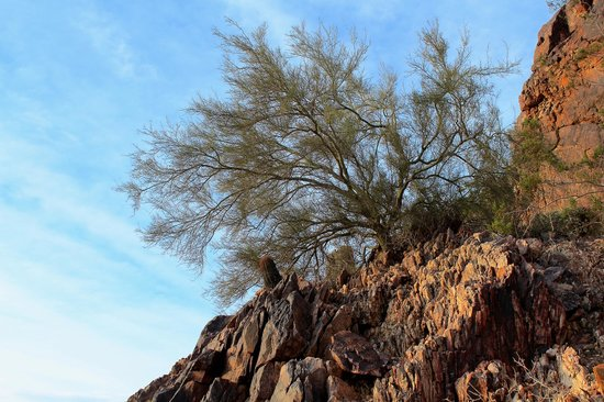 Phoenix Mountain Preserve: Life from the Rocks