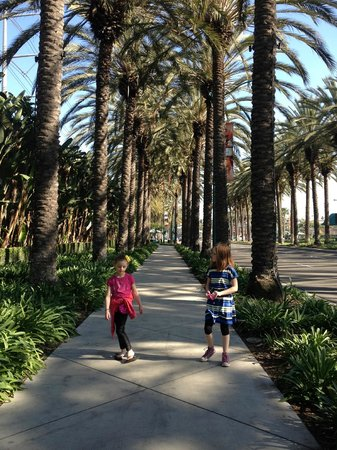 Residence Inn Anaheim Resort Area/Garden Grove: Easy and beautiful shaded walk to Disneyland. About 3km.