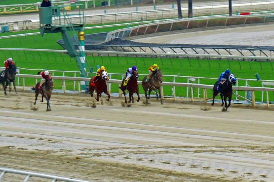 Santa Anita Race Park: Approaching the finish in the mud