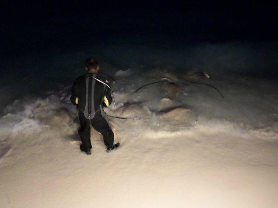 Kuramathi: Sting Ray feed