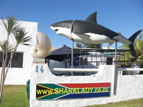 Sharklady Adventures : Hai-Attrappe beim Eingang zum Office von SharkLady