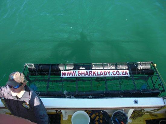 Sharklady Adventures : Hai-Käfig