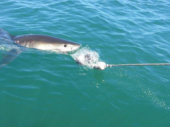 Sharklady Adventures : Das Objekt der Begierde