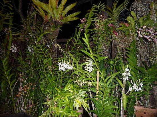 Natural Restaurant: la végétation sur la terrasse