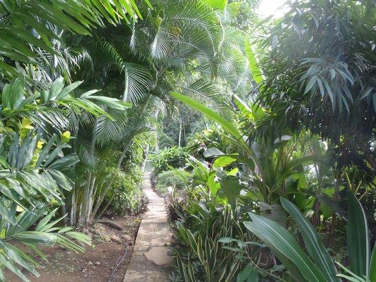 Au jardin des colibris : Chemin de la case créole Ananas.