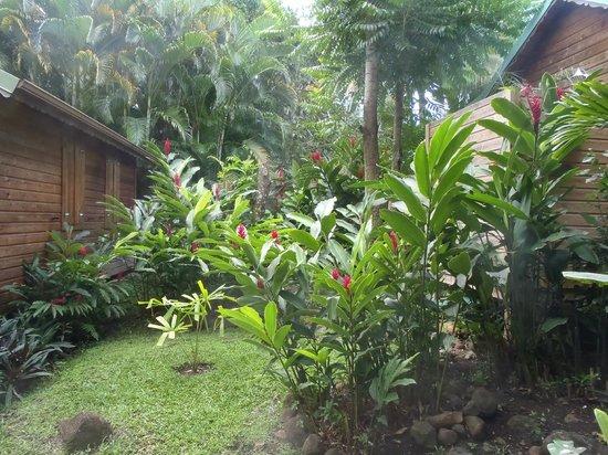 Anoli photo de au jardin des colibris deshaies for Au jardin des colibris