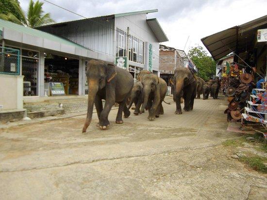 Hotel Elephant Bay: arrivée à la rivière
