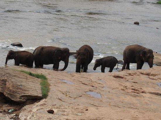 Hotel Elephant Bay: bain des élépants