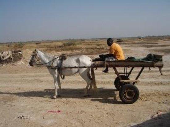 Djidjack : mit Pferdewagen unterwegs