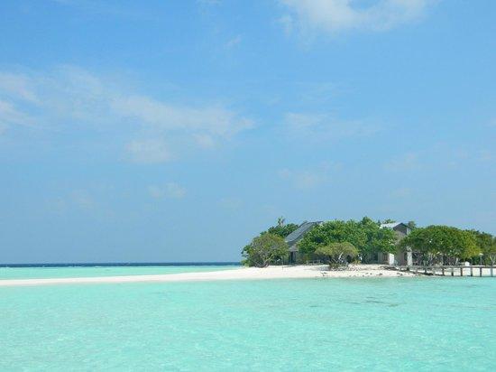 Maldive Due Palme : isola  diambara