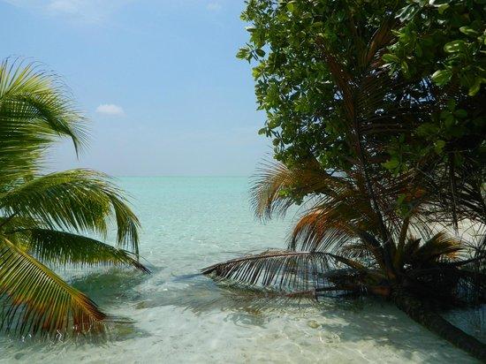 Maldive Due Palme : bodumora