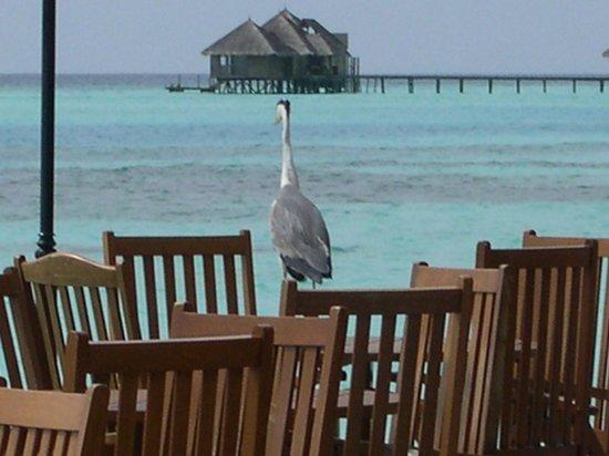 Paradise Island Resort & Spa: At bar