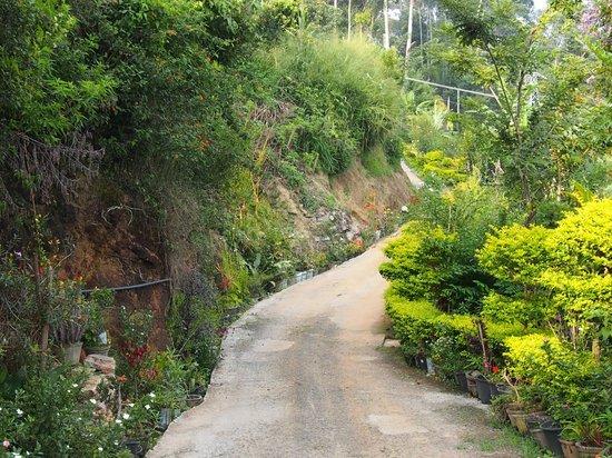 Ella Gap Panorama : chemin menant à l'hôtel