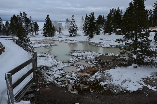 Scenic Safaris: West Thumb Geyser Basin