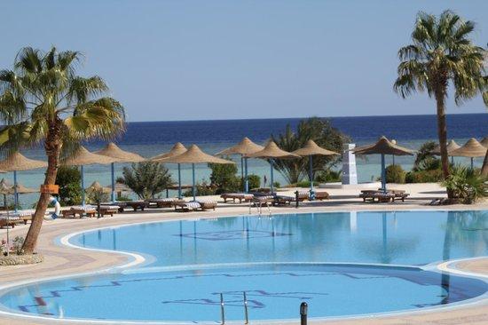 Blue Reef Red Sea Resort : Swimming Pool