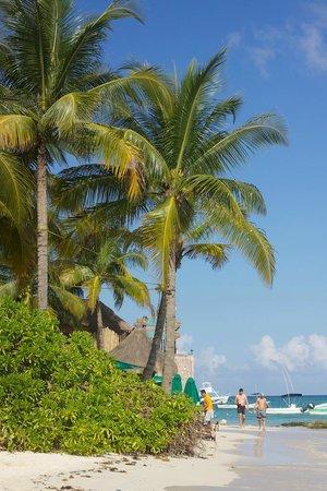 The Royal Playa del Carmen : Beach