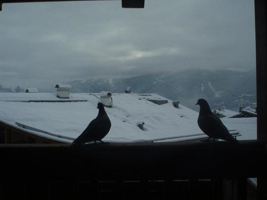 Hotel & Restaurant Alpino: piccioni sul balcone della camera