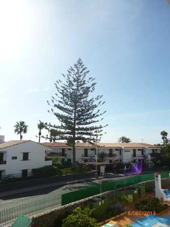 Apartamentos Montemar : Gorgeous tree accross the street