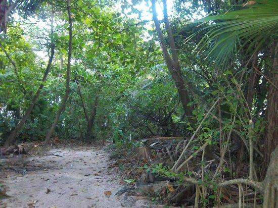 Caribbean Villas Hotel: Small trail at Villas