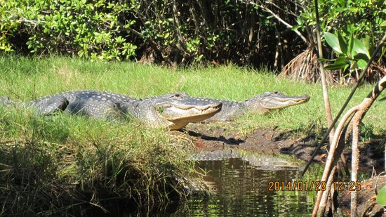 Tour the Glades - Private Wildlife Tours: Mr. & Mrs. catching some rays