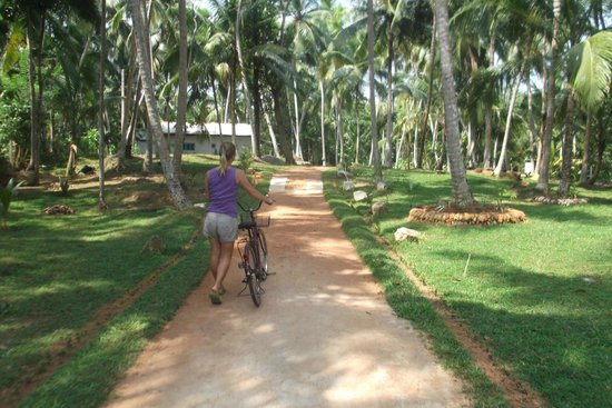 Mihin Villa Bentota: Private driveway from the road