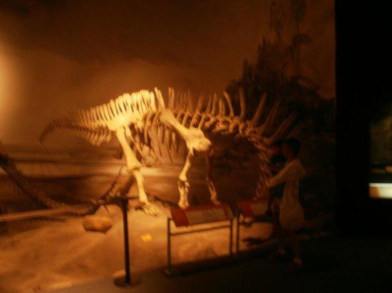 Museo Paleontologico Egidio Feruglio: Dinosaurio  patagonico.