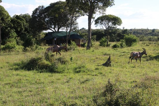 Offbeat Mara Camp: Animals right outside out tent