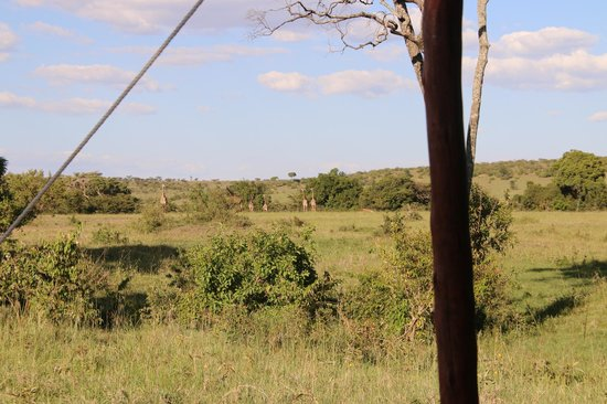 Offbeat Mara Camp: View from our tent