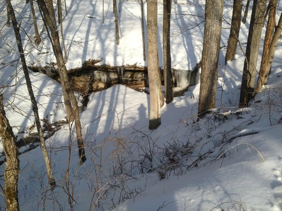 Cherry Ridge Retreat: Winter Wonderland!  Looking down one of the ravines