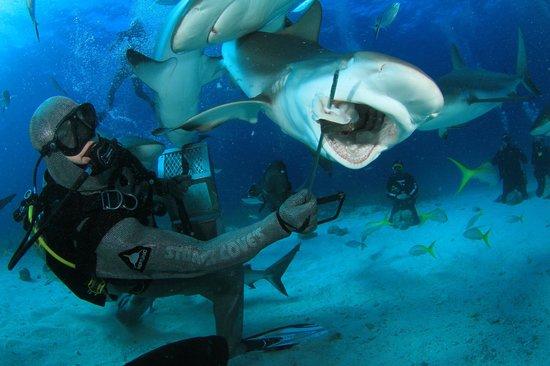 Stuart Cove's Dive Bahamas : Shot of potential killing power
