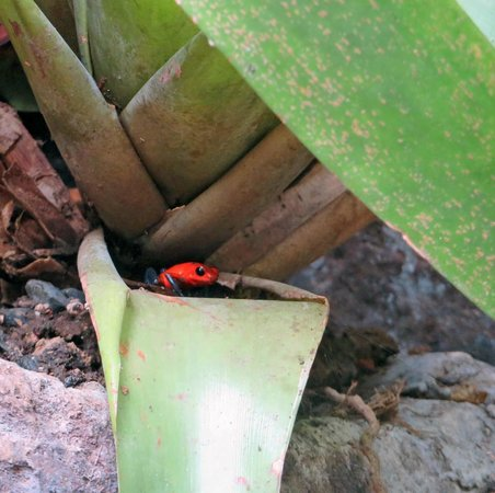 Nature Adventures : La Paz Waterfall and Wildlife Gardens
